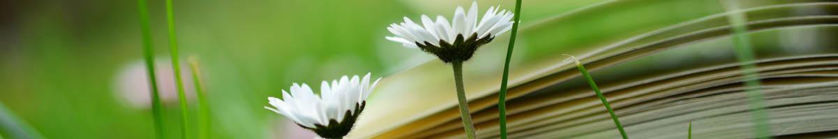 bloemen boek